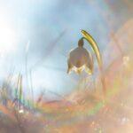 Helios - boh slnka | fotostory